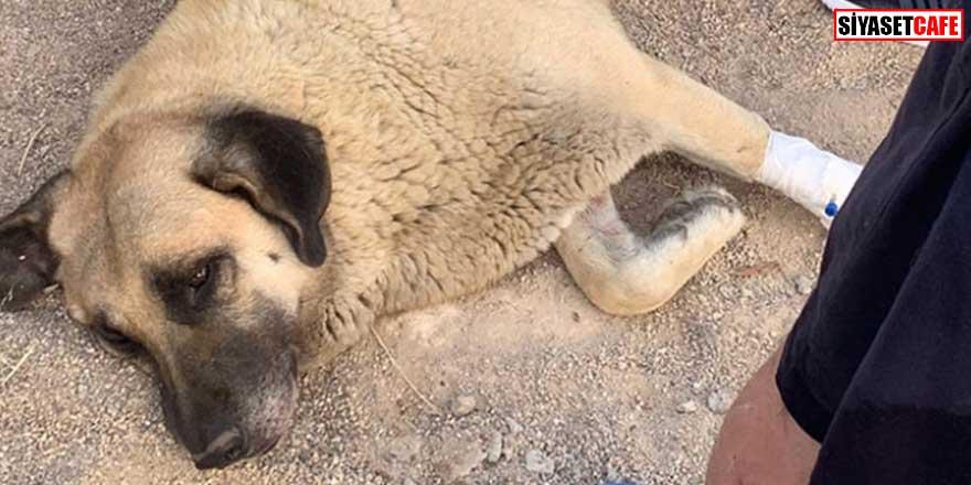 Kan donduran olay! Sokaktaki köpeği bıçakladı! Gözaltına alındı...