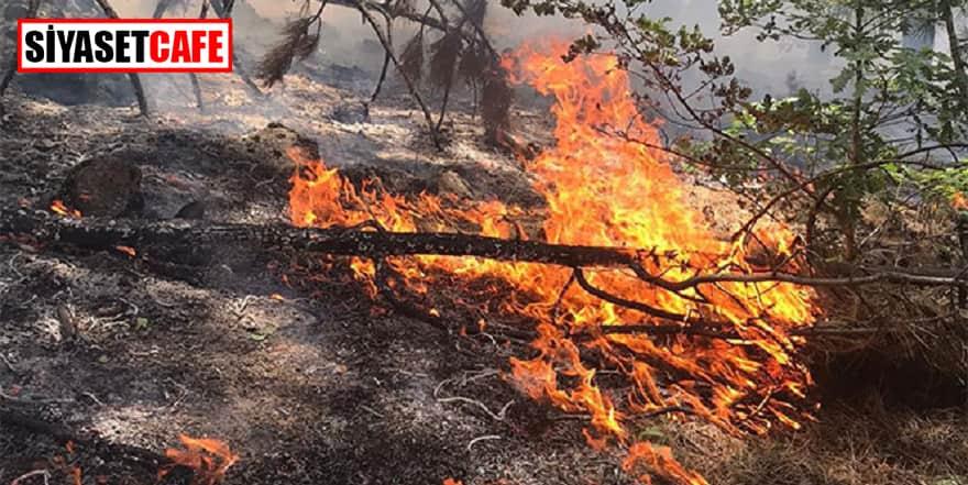 Soğuk Milli Parkı'nda 2.yangın paniği