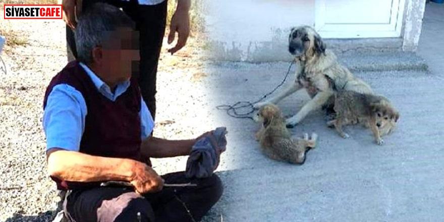 Kocaeli'de iğrenç olay! Köpeğe tecavüz eden 73 yaşındaki sapık suçüstü yakalandı