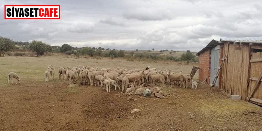 Biga'da çiçek hastalığı alarmı! 15 köy karantinada