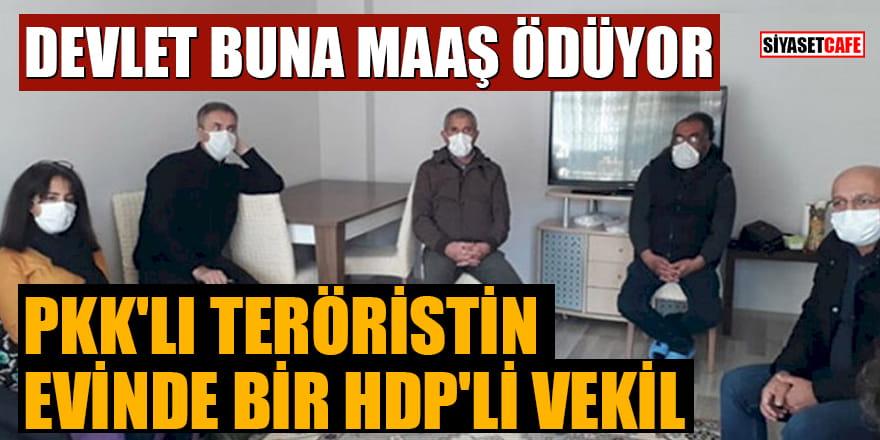 Devlet buna maaş ödüyor! PKK'lı teröristin evinde bir HDP'li vekil