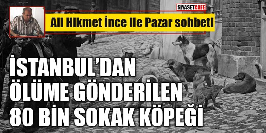Ali Hikmet İnce yazdı: İstanbul'dan ölüme gönderilen 80 bin sokak köpeği