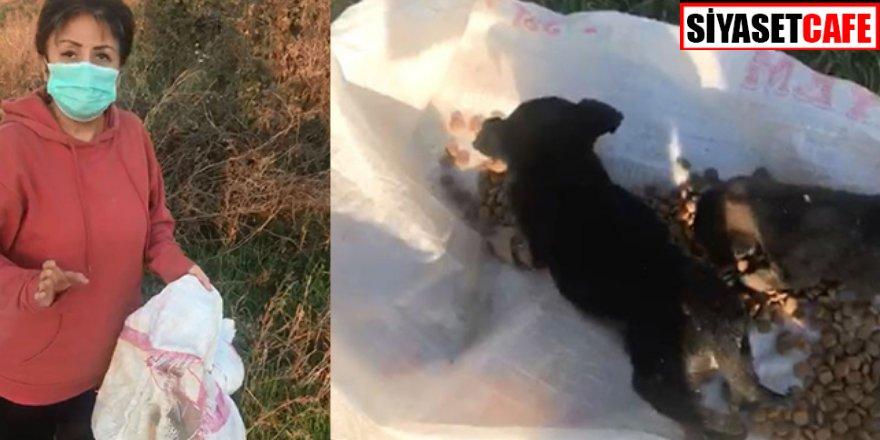 Görenleri dehşete düşürdü! 12 köpeği canlı canlı çuvala koyup öldürdüler