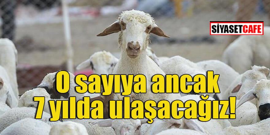 Türkiye Damızlık Koyun Keçi Yetiştiricileri Merkez Birliği Başkanı açıkladı