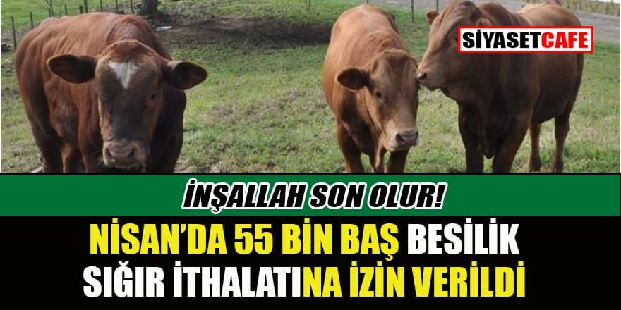 Nisan ayı besilik sığır ithalatı sayısı