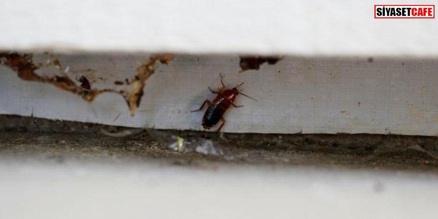 Restorana binden fazla hamam böceği attılar