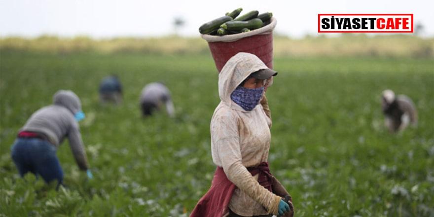 Stratejik sektör tarımda çiftçi sayısı azalıyor