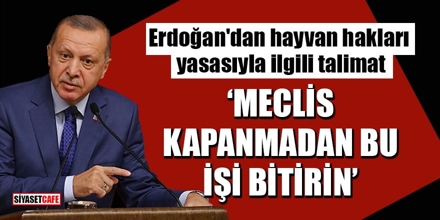 Erdoğan'dan hayvan hakları yasasıyla ilgili talimat: Meclis kapanmadan bu işi bitirin