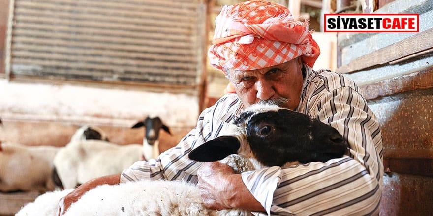 77 yıldır Sakız koyunu yetiştiriyor