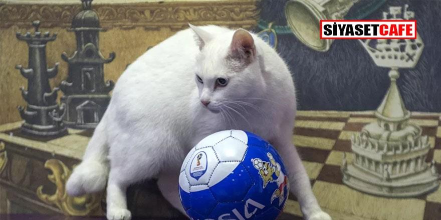 'Kahin kedi' Aşil bu akşamki maçta Belçika'nın galip geleceğini öngördü