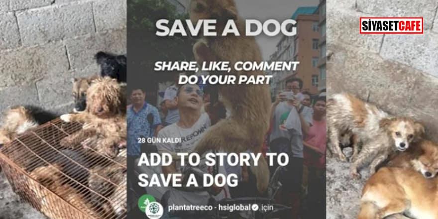 Instagram'da köpeklere yönelik başlatılan kampanyanın sahte olduğu anlaşıldı!