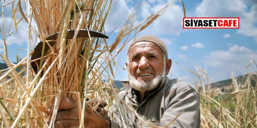 TMO kuraklık bahanesiyle buğday ithal edecek!