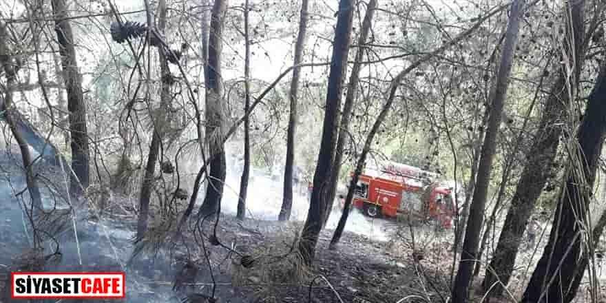 Fethiye'deki orman yangını: 2 dönüm alan zarar gördü
