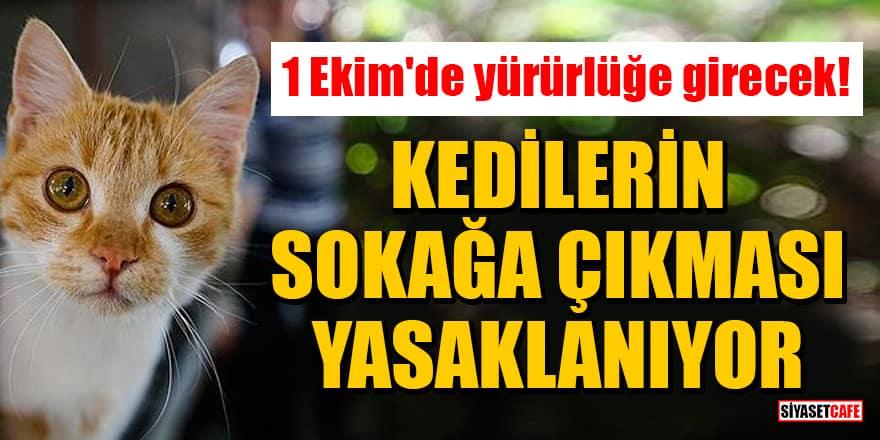 1 Ekim'de yürürlüğe girecek! Kedilerin sokağa çıkması yasaklanıyor