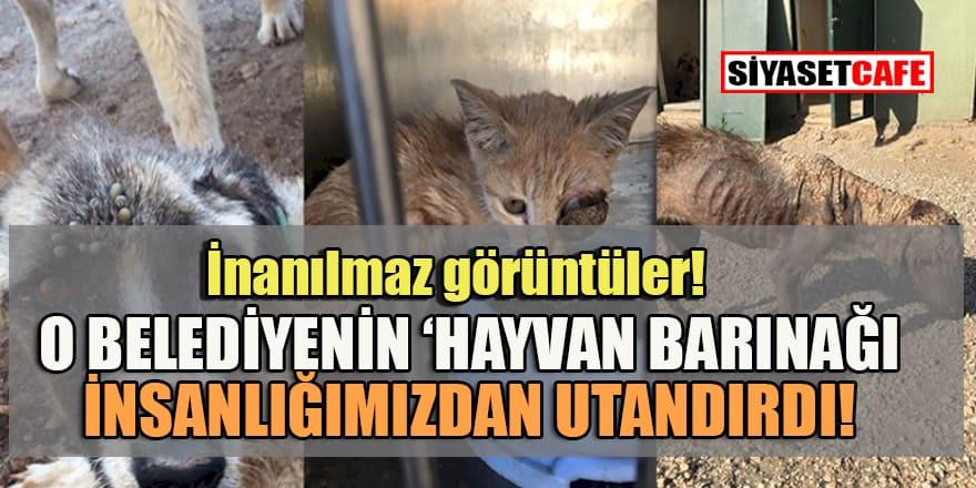 Hayvan barınağı değil 'ölüm' kampı!