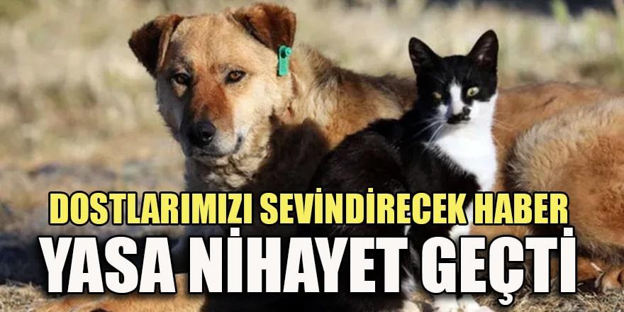Hayvanları Koruma Kanunu komisyonda kabul edildi