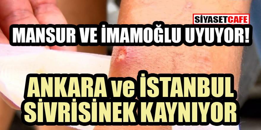 Ankara ve İstanbul'un sivrisinekleri canavarlaştı! Belediyeye büyük tepki!