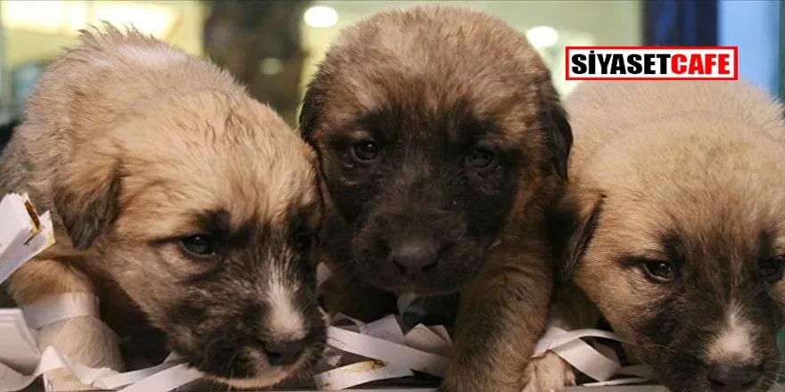 Hayvanları Koruma Kanunu yasalaştı, 'kısırlaştırma seferberliği başlıyor'