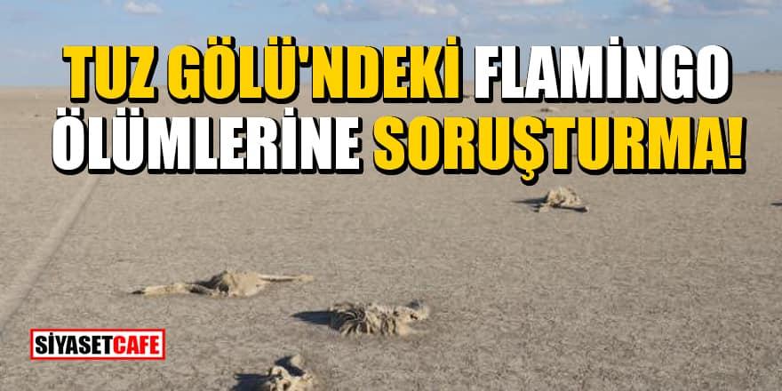 Valilik duyurdu: Tuz Gölü'ndeki flamingo ölümlerine soruşturma