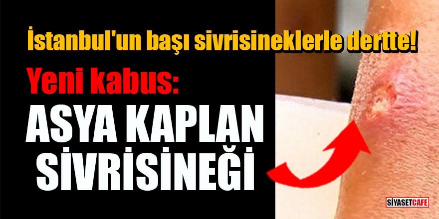 İstanbul'un başı sivrisineklerle dertte! Yeni kabus: Asya Kaplan Sivrisineği