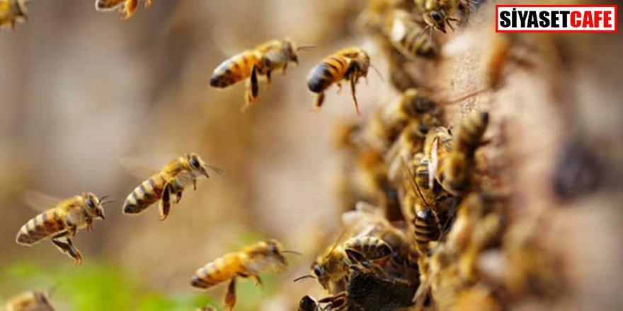 Arıların saldırısına uğradılar: 1 ölü, 4 yaralı