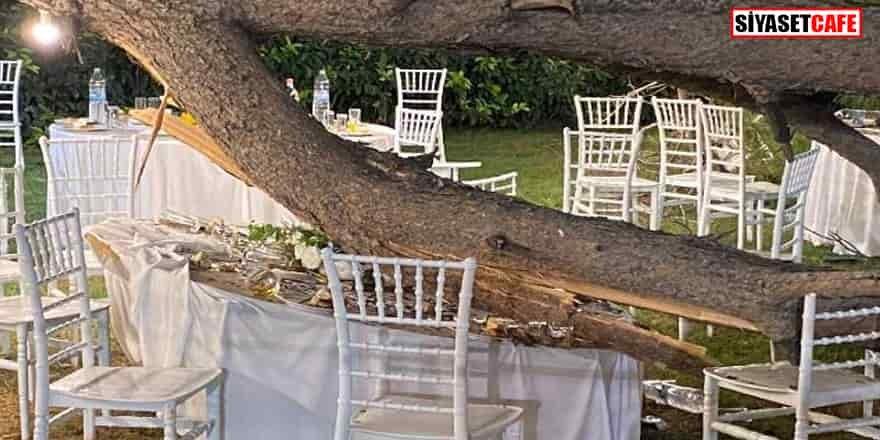 Düğünde ağaç devrildi: Ölü ve yararlılar var
