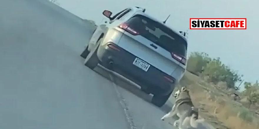 ABD'de Husky cinsi köpeği çöle terk eden adama dava açıldı