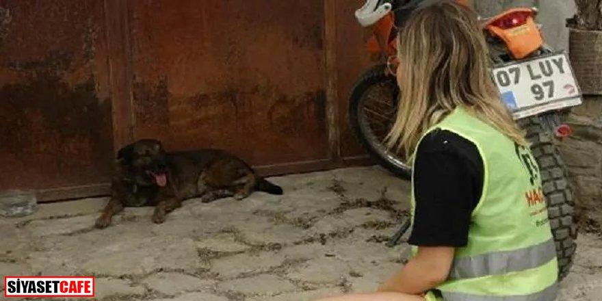 Yürek burkan görüntü: Yangında hayatını kaybeden çiftin köpekleri evin önünden ayrılmıyor