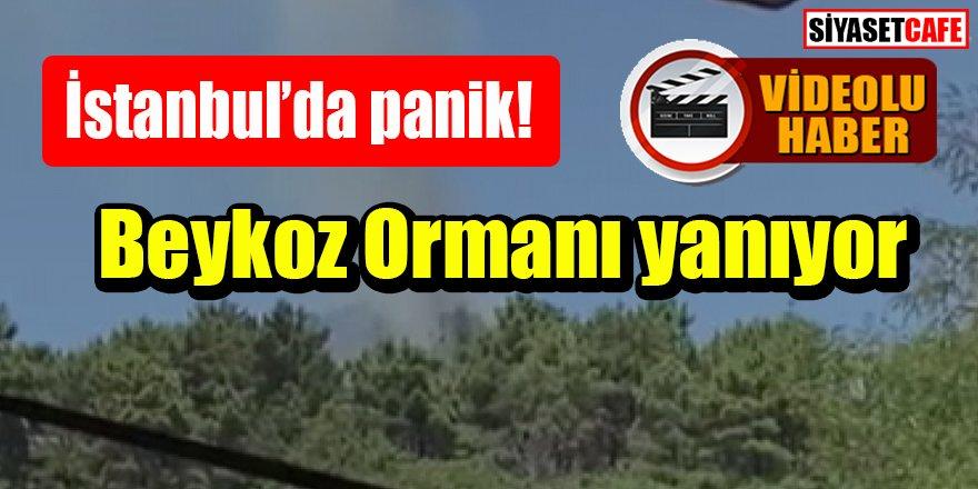 İstanbul'da panik: Beykoz'da orman yangını