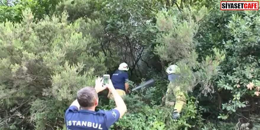 İstanbul'da bir orman yangını paniği daha!