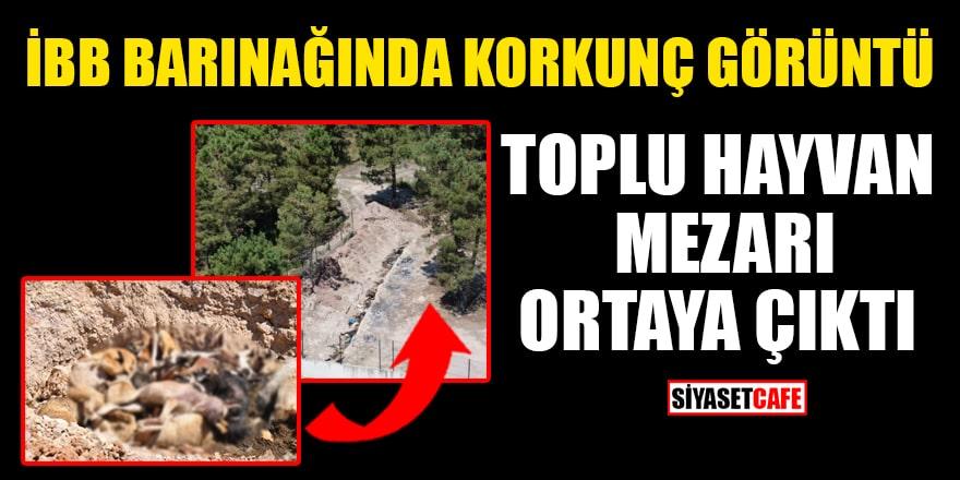 İBB barınağında dehşete düşüren görüntü: Toplu hayvan mezarı ortaya çıktı