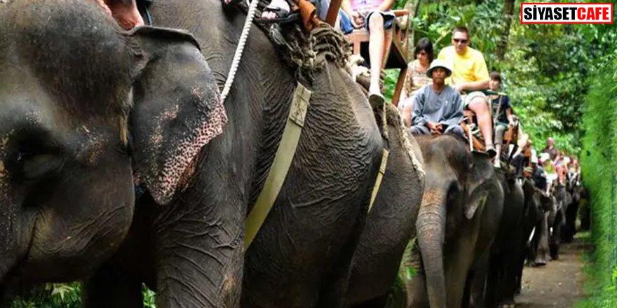 Alkollü fil kullanmak yasaklandı