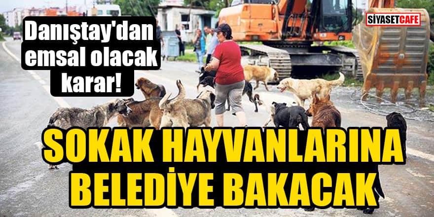 Danıştay'dan emsal olacak karar! Sokak hayvanlarına belediye bakacak