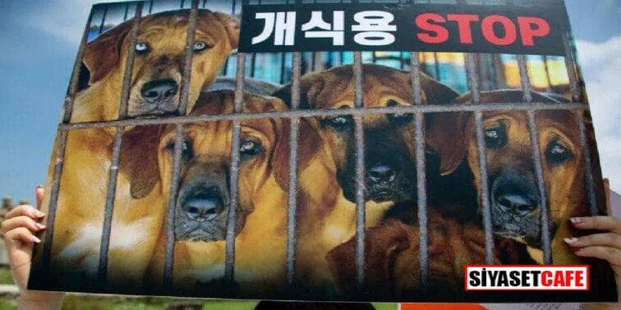 Güney Kore'de köpek eti tüketimine yasak gelebilir
