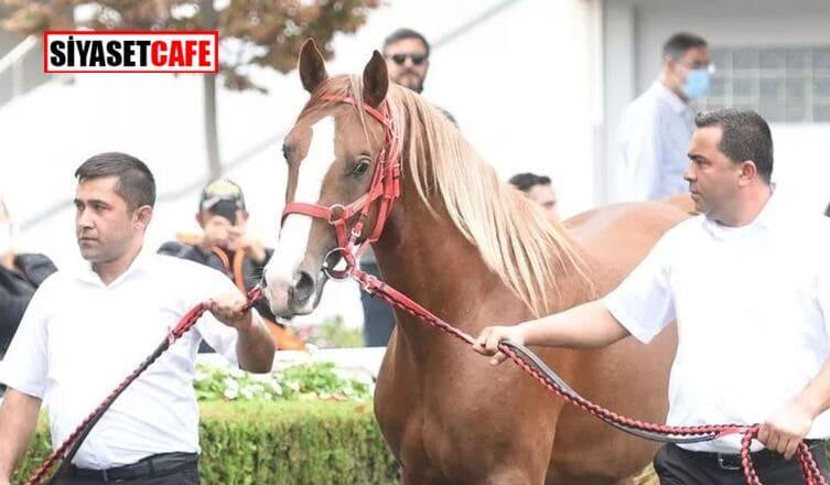 Veliefendi'de satılan at, Türkiyetarihinin en yüksek bedelle alınan atı olarak tarihe geçti