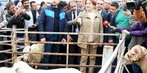 Akşener: Söz veriyorum; Tarım Bakanını size soracağım