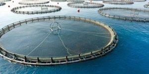 Kültür balıkçılığı rekora koşuyor