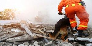 Deprem Olurken Ne Yapmalı? Deprem Sonrası Neler Yapmalı?