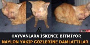 Hayvanlara işkence bitmiyor! Naylon yakıp gözlerine damlattılar