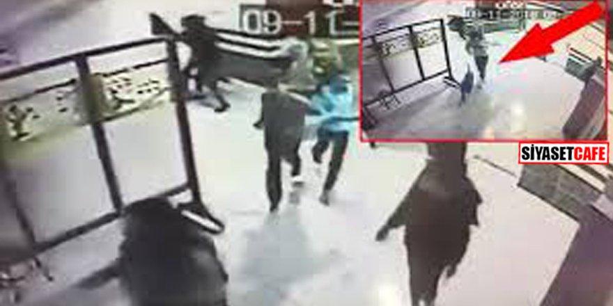 Kocaeli'de Pitbull okula daldı! Öğrenciler korku dolu anlar yaşadı