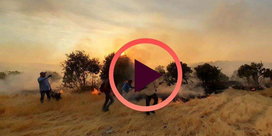 Tehlike büyüyor! Mardin'deki büyük yangın hala söndürülemedi