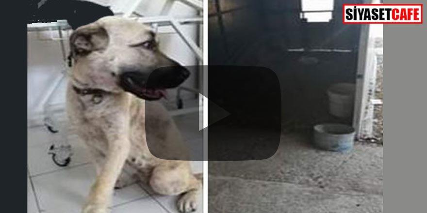 Muğla'da akıl almaz olay! Köpeğe tecavüz eden Suriyeli öldü