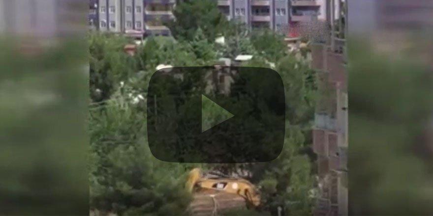 Vatandaş HDP'li Belediyenin ağaç katliamına isyan etti