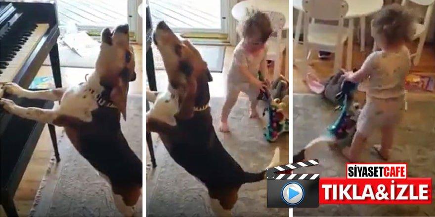 Bir köpek bir çocuk: Böyle tatlı resital görmediniz