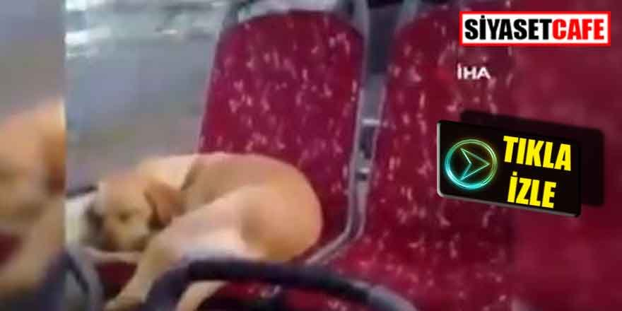 Üşüyen köpeği otobüse aldı, sosyal medyada olay oldu