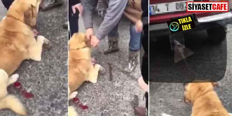 Vicdansız! Köpeği arabasının arkasına bağlayıp sürükledi