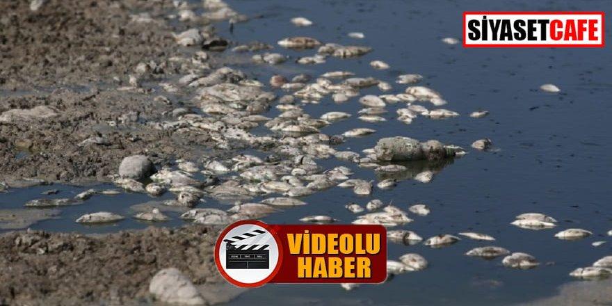 Bursa'da neler oluyor? Binlerce balık öldü