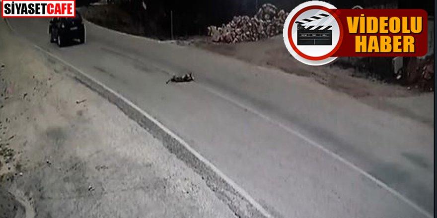 Yolun karşısına geçmeye çalışan köpeğe çarpıp kaçtı