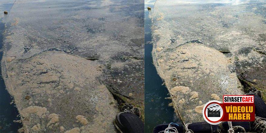 Deniz salyası Karadeniz'de de ortaya çıktı!