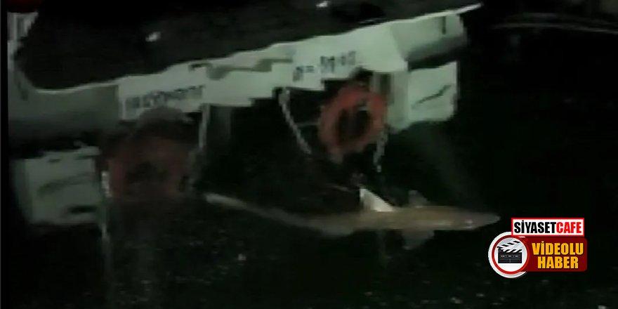 Haliç'te 2 metre boyunda köpek balığı!